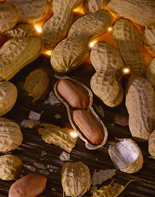 Agriculture - Mature Peanuts On Wood Poster