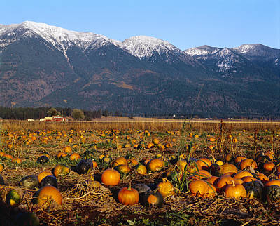 Agriculture - Pumpkin Patch In Autumn Poster by Chuck Haney
