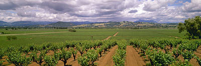 Agriculture - Wine Grape Vineyards Poster by Timothy Hearsum
