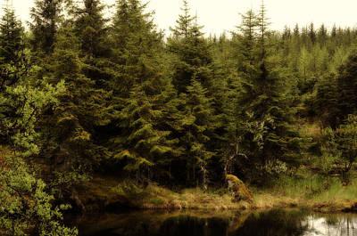 Poster featuring the photograph Alaska Beauty by Davina Washington