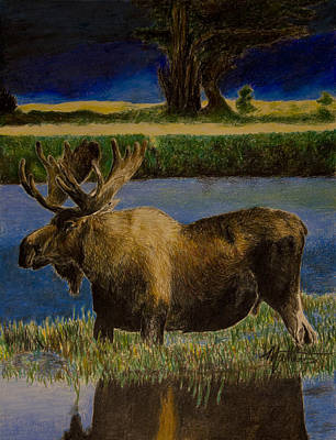 Alaskan Moose Poster