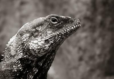 Alert Lizard  Poster by Jim Hughes