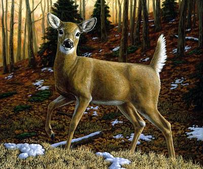 Whitetail Deer - Alerted Poster by Crista Forest