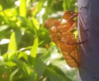 Alien Bug Poster