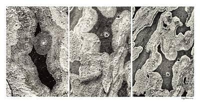 Alien Triptych Landscape Bw Poster