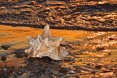 Alight And Aglow Poster by Frozen in Time Fine Art Photography