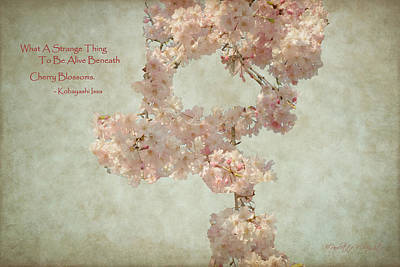 Alive Beneath Cherry Blossoms Poster by Paulette B Wright
