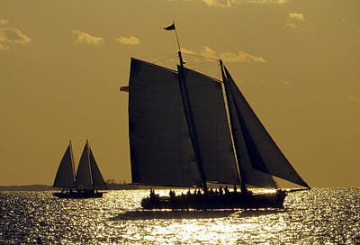All Sails Sunset In Key West Poster