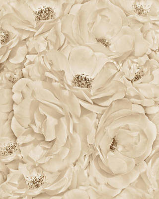 All The White Roses In Sepia Poster by Jennie Marie Schell