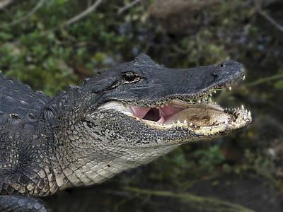 Alligator 1 Poster