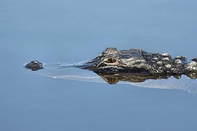 Alligator-7 Poster