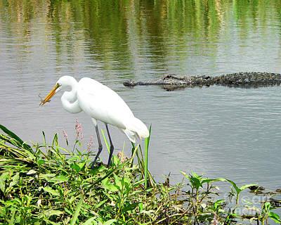 Alligator Egret And Shrimp Poster