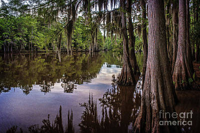 Alligator Swamp On Caddo Lake Poster