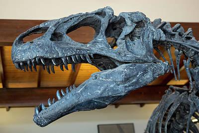 Allosaurus Dinosaur Fossil Display Poster by Jim West