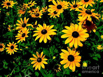 Sunflower Allure Poster