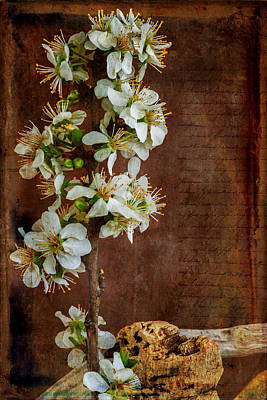 Almond Blossom Poster by Marco Oliveira