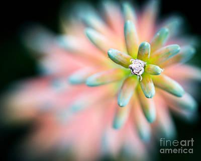 Aloe Vera Flower Poster by Eyzen M Kim