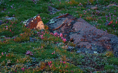 Poster featuring the photograph Alpine Blush by Jim Garrison