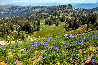 Alpine Meadow Poster by Robert Bales