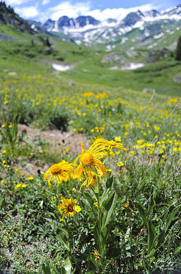 Alpine Sunflowers Poster