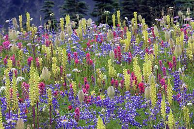 Alpine Wildflowers, Mount Rainier Poster by Ken Archer