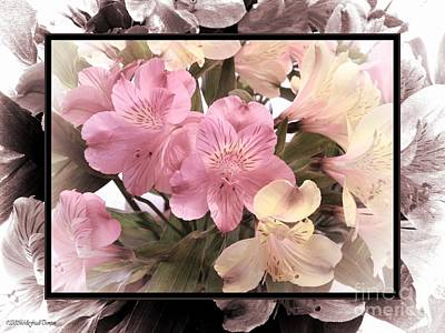 Alstroemeria Lily Of Peru Poster