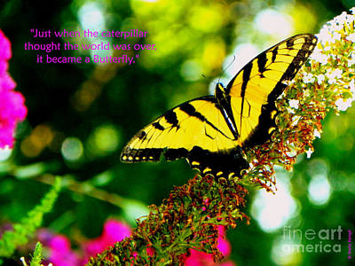 Always Hope - Butterfly Poster by Shelia Kempf