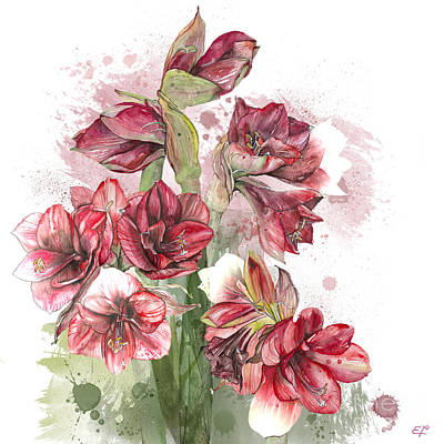 Amaryllis Flowers - 4. - Elena Yakubovich Poster