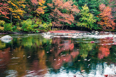 Amazing Fall Foliage Along A River In New England Poster by Edward Fielding