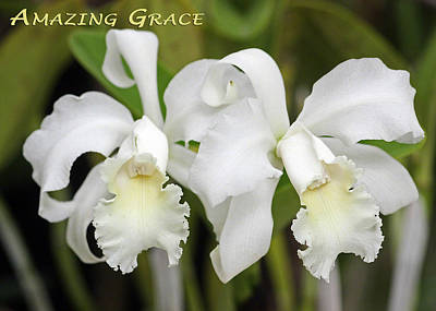 Amazing Grace Poster by Dawn Currie