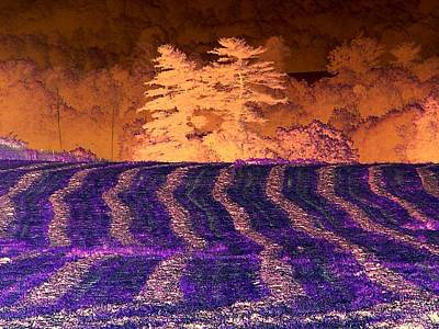 Amazing Summer Landscape - Negative Art - Reverse Imaging Poster by James Scott Preston