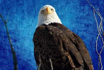 American Bald Eagle Blues Poster