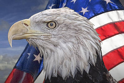 American Bald Eagle With The Stars And Stripes Poster