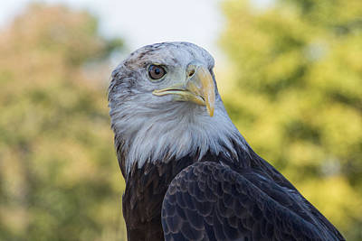 Poster featuring the photograph American Eagle by Jeanne May