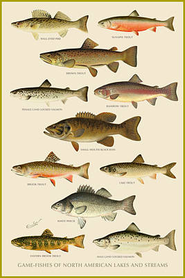 American Game Fish Poster by Gary Grayson