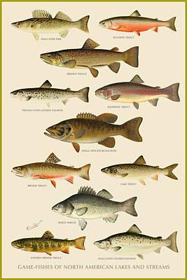 American Game Fish Poster