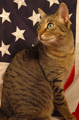 American Kitty 5 Poster