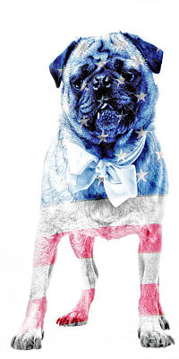American Pug Phone Case Poster by Edward Fielding