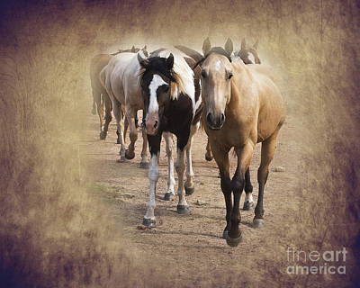 American Quarter Horse Herd Poster by Betty LaRue