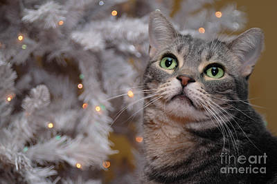 American Shorthair Cat With Holiday Tree Poster by Amy Cicconi
