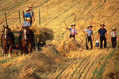 Amish Boys Wheat Harvest  Poster by Blair Seitz