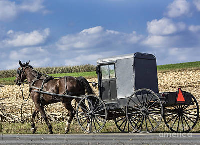 Amish Buggy Poster by John Greim