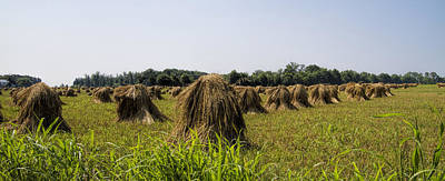 Amish Wheat Stacks Poster by Kathy Clark