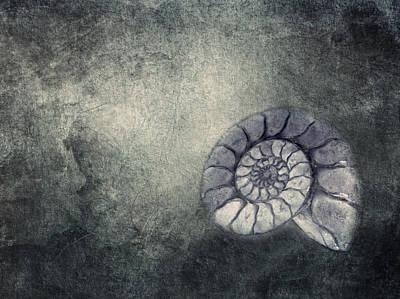 Ammonit  Poster