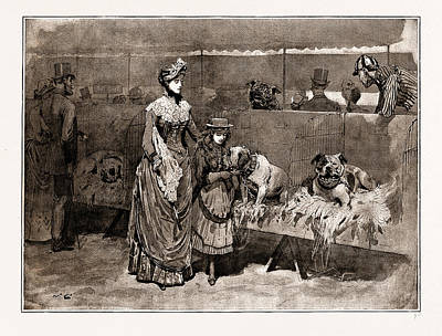 Among The Bull Dogs At The Kennel Club Show Poster by Litz Collection