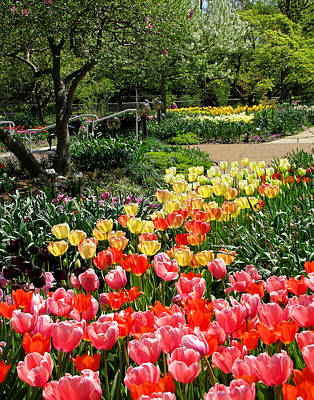 Poster featuring the photograph Among Tulips by John Freidenberg