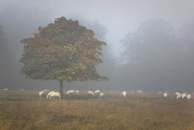 Amongst The Flock On An Autumn Morning Poster by Chris Fletcher