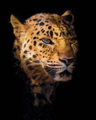 Amur Leopard Portrait 2 Poster by Ernie Echols