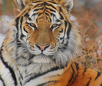 Amur Tiger Magnificence Poster