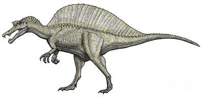 An Albino Spinosaurus Poster by Vitor Silva